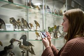 Eine Besucherin ist mit dem Mediaguide im Schaumagazin der Übersee Museums unterwegs. Quelle: Übersee-Museum Bremen, Foto: Volker Beinhorn